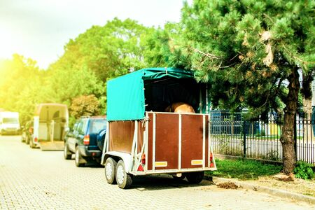 Funny horse transport. Carriage for horses on the high way
