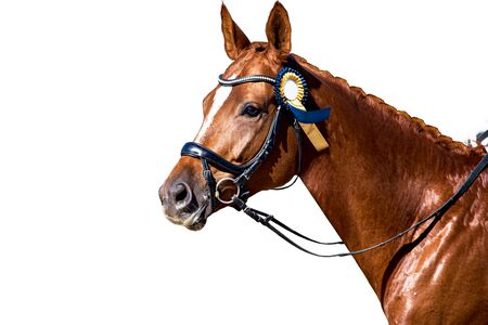 Horse Portrait. A beautiful and proud animal. The thoroughbred