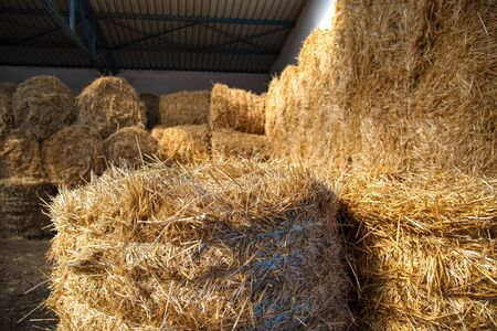 Straw in the stables is neatly folded. Natural food to animals