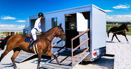 Horse transportation van. Funny horse transport. sports horse. the jockey operates a horse Reklamní fotografie