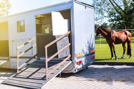 horse vehicle. Carriage for horses. Auto trailer for transportation of horses. transportation livestock. Horse transportation van. equestrian sport