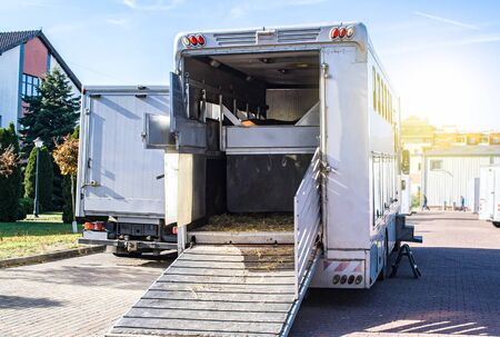 Carriage for horses. Auto trailer for transportation of horses. transportation livestock. Horse transportation van, equestrian sport Stock fotó