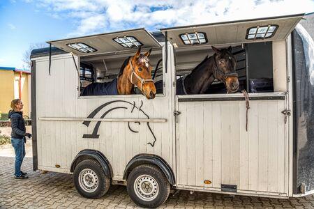 Pferd Fahrzeug. Beförderung für Pferde. Autoanhänger für den Transport von Pferden. Vieh transportieren. Pferdetransportwagen, Pferdesport Standard-Bild