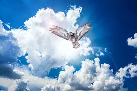 Holy spirit dove, the bird soars above the ground, Stockfoto