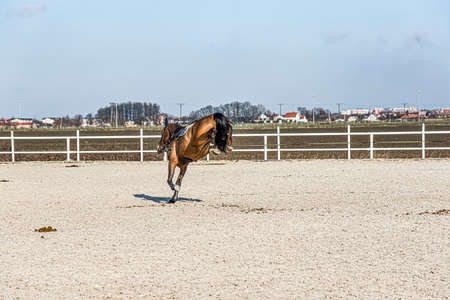 Sports horse in the arena. equestrian sports in detail