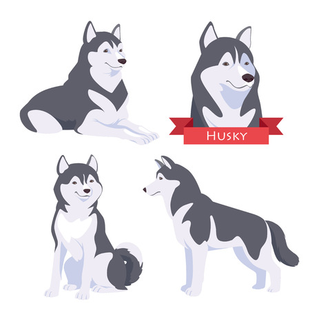 husky: Husky in different poses. Dog in flat vector style isolated on a white background.
