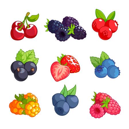 chicouté: Jeu de différentes baies. Cerise, de mûre, de canneberge, de cassis, fraise, myrtille, chicouté, myrtille et la framboise isolé sur un fond blanc. Illustration