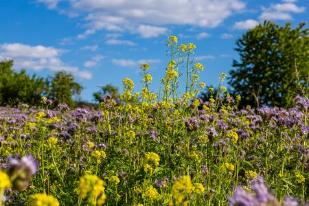 Colorful wild flowers. Wildlife. Summer in the countryside. Vivid and natural colors. Фото со стока