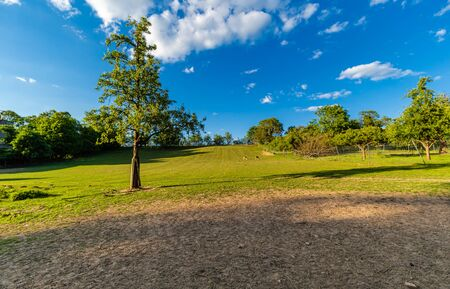 Single tree on the field. Enclosure for animals. Fenced area. Rural areas. Blue sky. Summer outside the city.