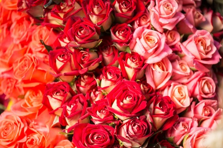 are thrust: Huge bouquet of incomparable colorful roses helps every woman to feel happiness Stock Photo