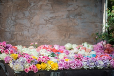 valise: Great colored roses growing in the flower-bed in the form of valise