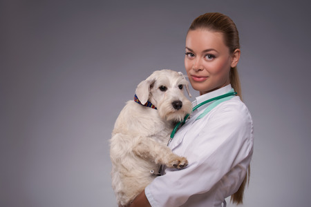 Each tiny patient will steal your heart. A young female vet holding an adorable little dog while standing against grey background photo