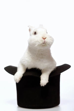 Magicians rabbit. Closeup image of a cute white bunny looking out from the magicians black hat isolated on white background