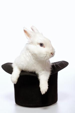 Magicians Kaninchen. Nahaufnahme Bild von einem niedlichen weißen Hasen heraus von den Magiern schwarzen Hut isoliert auf weißem Hintergrund