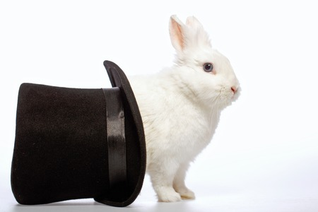 beautiful rabbit: Magical rabbit. Side view image of a cute white bunny looking out from the magicians black hat isolated on white background Stock Photo