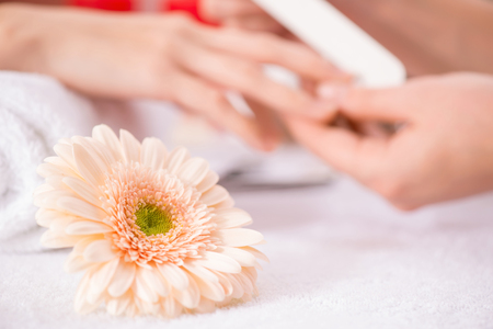 fingertips: Close up of beautiful light flower lying on the table with professional manicurist making manicure in the background Stock Photo