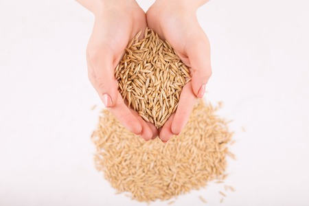 Organic wheat. Human hands filled with selected golden wheat.