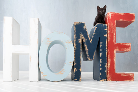 Small black kitten. Close up of a nice cute black kitten sitting on the wooden letters HOME and looking in front of him