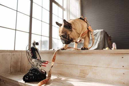 Amusing dog looking at robot of his master Stock Photo