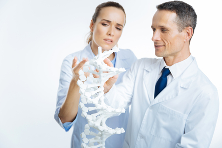 genomics: Professional doctor looking at a dna model Stock Photo
