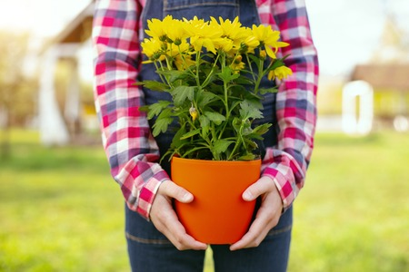 So beautiful. Close up of yellow flowers being in hands of a delighted nice girl