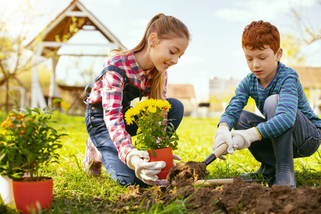 Family occupation. Cute positive girl holding a flower pot while helping her brother to plant them