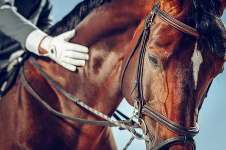 Amazing animal. Close up of a face of a beautiful nice horse looking at you Stock Photo
