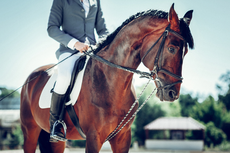 Graceful animal. Close up of a horse with a professional rider on its back Stock Photo