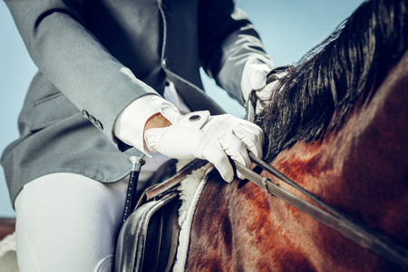 Special outfit. Close up of a male hand in a white glove while touching the horse