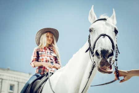 Beautiful mare. Low angle of a white horses face while being led by the snaffle