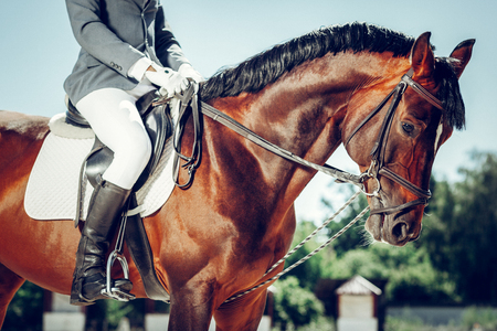 Smart animal. Beautiful brown horse looking at you while having a rider on its back Stock Photo