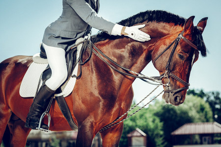 Best animal. Professional male rider stroking his horse while sitting on its back
