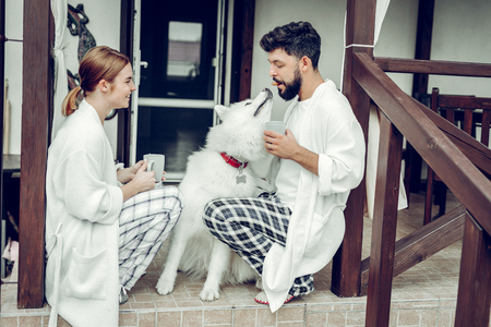 Happy family mornings. Attractive dark-haired cheerful bearded husband feeding the fluffy white dog while his charming appealing bewitching red-haired wife sitting with coffee. Stockfoto