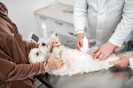 Radiografía para perro. Veterinario profesional haciendo radiografías para perrito blanco acostado en la mesa cerca de su dueño Foto de archivo