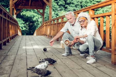 Giving food to birds. Contended nice-looking beaming joyous nice-looking sitting silver-haired spouses in years wearing stylish clothes giving the crumbs to doves on the bridge.