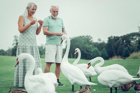 Gracious birds. Joyful aged couple having fun while feeding swans together Foto de archivo - 124984333