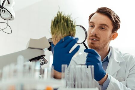Biology project. Smart young man studying the green grass while working in the biological lab Stockfoto