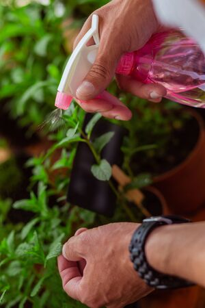 Gifted hands. Water from sprinkling can in hands of a florist spraying plants in a flower shop.