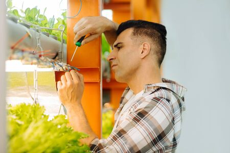 Using screwdriver. Dark-haired strong man using the screwdriver while hanging lettuce in pots 免版税图像
