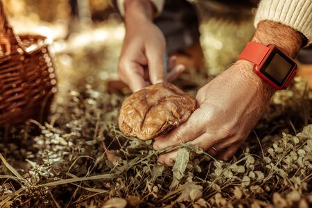 Going mushroom-hunting. Hands of a married man near the basket cutting a big mushroom in the forest.