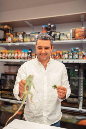Man feeding iguana. Handsome mature man owning pet shop feeding iguana with lettuce