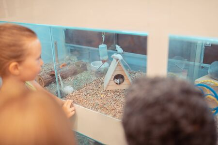 Watching hamster moving. Little blonde-haired girl watching hamster moving with parents