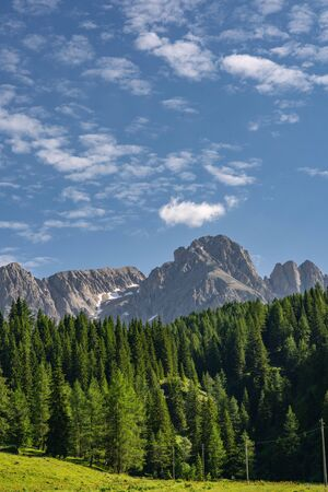 Scenic Alps with green pine tree forest near high rocky mountain, under beautiful blue sky. Copy space in left side