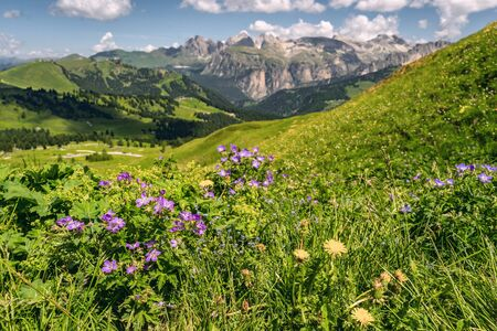 Beautiful landscape with wildflower on green hill near high mountain and pine tree forest, under blue sky in Alps. Focus on small flower Reklamní fotografie