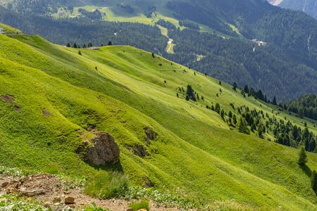 Idyllic landscape with green mountain hill and pine tree forest in national Alps park. Copy space in left side
