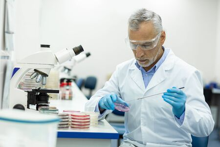 Health and medicine. Serious senior male person sitting at his workplace while looking at petri dish