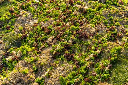Stones on coast with green moss and alga under sun