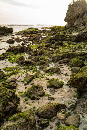Ocean beach under cliff with green alga and moss on stones