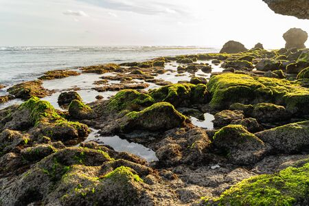 Rocks in wild beach are covered with moss and green seaweed Reklamní fotografie