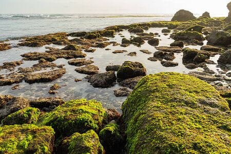 Clear waters of ocean are washing stones with alga and moss